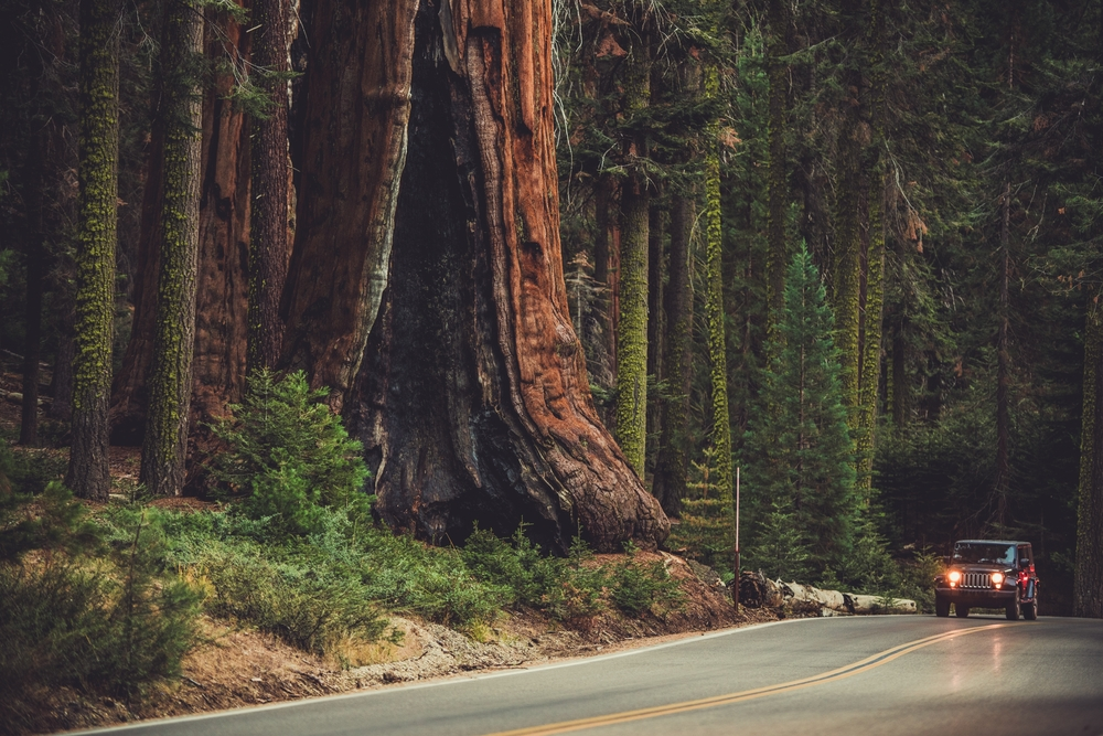 Sequoia National Park_763297786